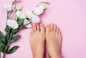 top view of female feet with glossy toenails near white eustoma flowers on pink background