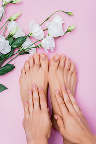 top view of female hands and feet with pastel nail polish near white eustoma flowers on pink background