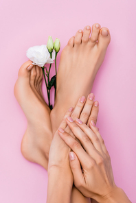 top view of female feet and hands with pastel enamel on nails near white eustoma flower on pink background