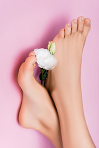 top view of female feet with glossy nail polish on toenails near white eustoma flower on pink background
