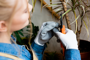 top view of woman in gloves touching leaves of transplanted plant near gardening tools
