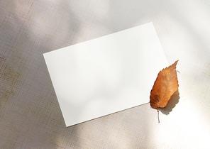 나무그림자 아래에 낙엽과 빈 카드