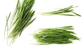 비건 음식 디톡스 푸드 슈퍼푸드 초록 그린 보리싹 풀 다발 묶음, 화이트 바탕 위에 텍스트 공간이 분리