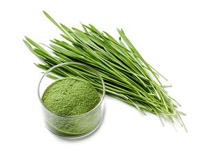 비건 음식 디톡스 푸드 슈퍼푸드 초록 그린 보리싹 풀과 유리 그릇의 가루 분말, 화이트 바탕 위에 텍스트 공간이 분리