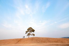 충북 토성의 나무와 커플사진입니다.