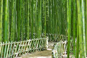태화강국가정원 십리대숲은하수길
