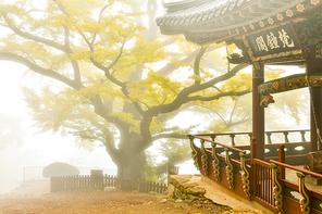 남양주 수종사의 가을