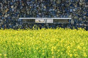 섭지코지의 봄