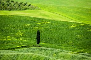 이탈리아 투스카니 평원의 봄