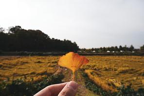 단풍잎과 주변 풍경