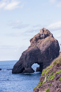 아름다운 섬 독도에 핀 해국.